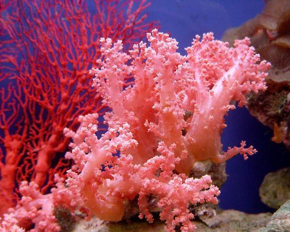 A cor living coral eleita pela pantone para o ano de 2019